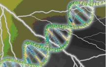 "New ""laser"" lighting on DNA and its repair"